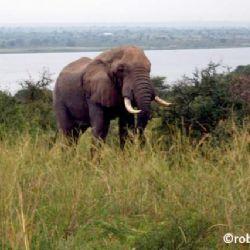 elefante a Marchison Park