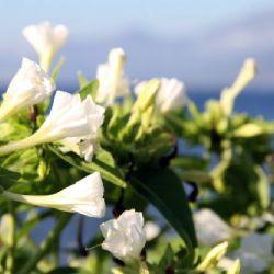 viaggio in Corsica - fiori e colori corsi - reportage Roby Rossi