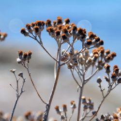 viaggio in Corsica - colori e fiori a Porto Vecchio - reportage Roby Rossi