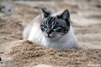 Su Pallosu - una colonia felina sul mare