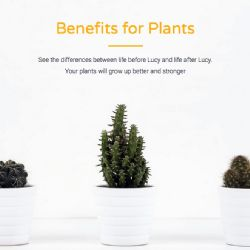 piante più felici Lucy di Solenica