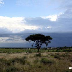 Africa - l'altra tua metà
