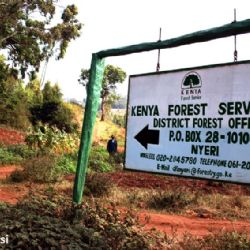 Kenya Forest Service - Nyeri